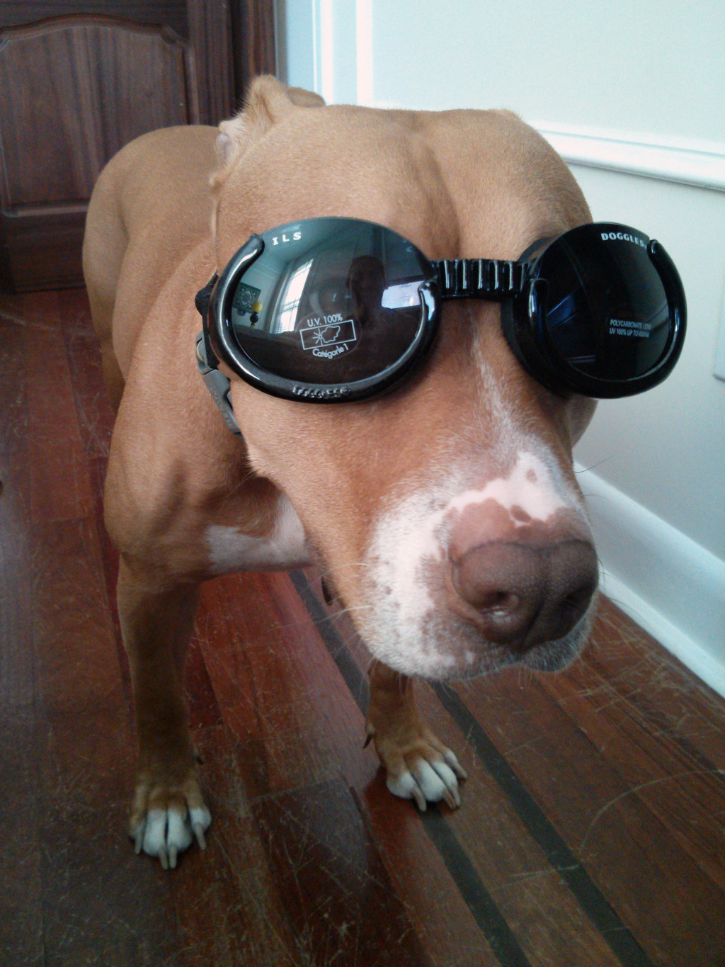 trinket_olive-wearing-doggles