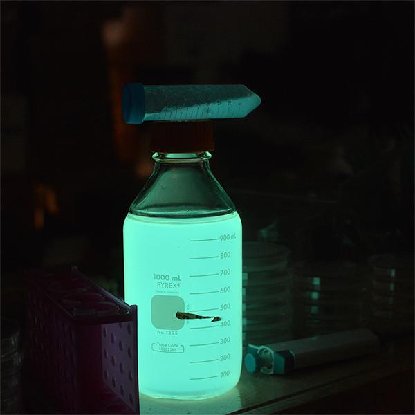 biolumin1
